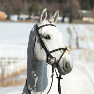 Bridle - Nevada w/ Sheepskin Noseband